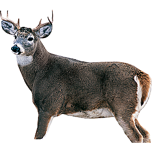Montana Decoy Montana Whitetail Dream Team Decoy Combo - steel 851234000300